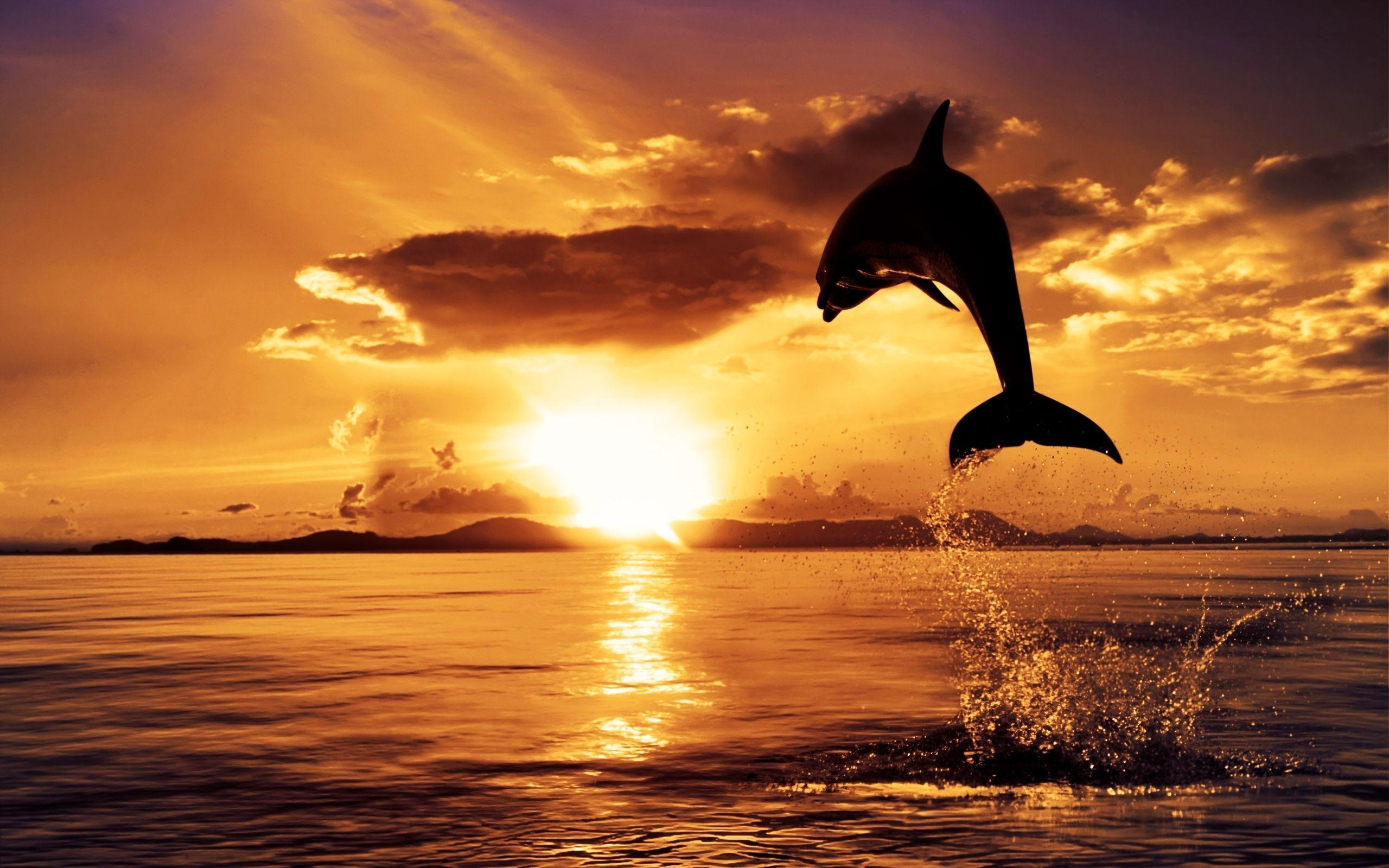 Dolphin jumping at sunset