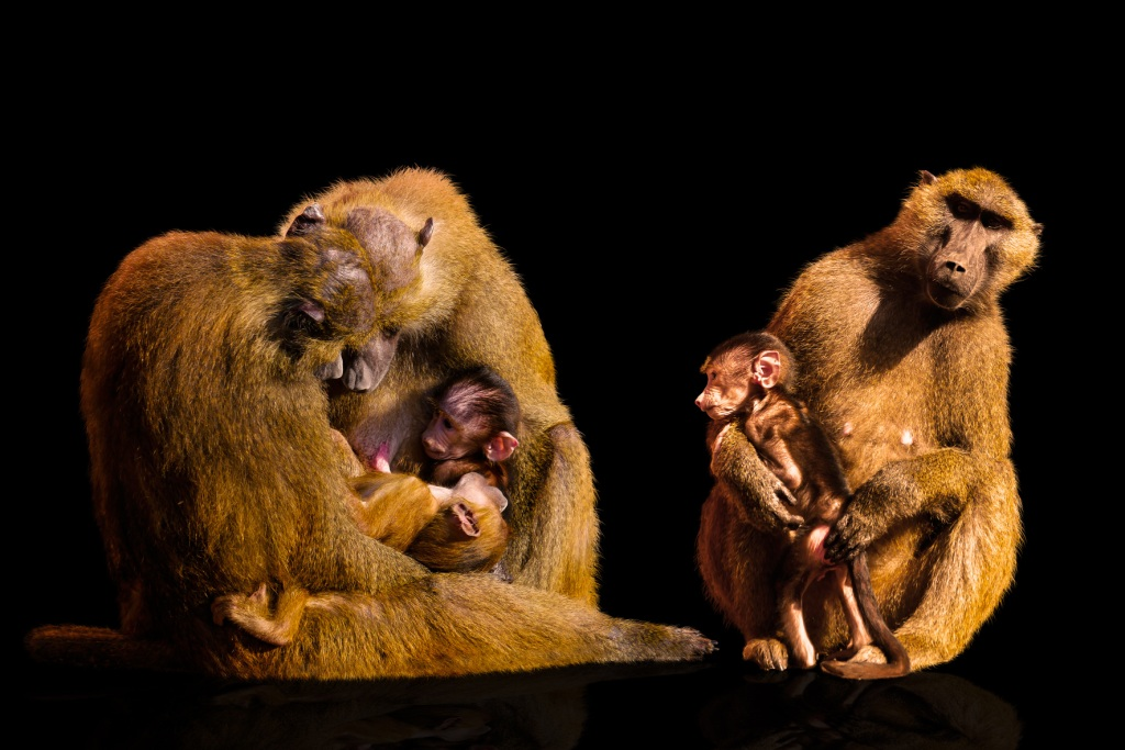 'Survival of the Most Loving' primates