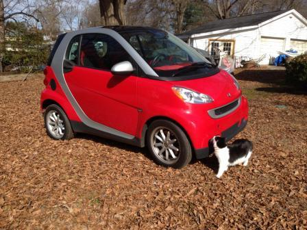Cat in front of small car