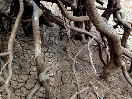 Roots into cracked soil