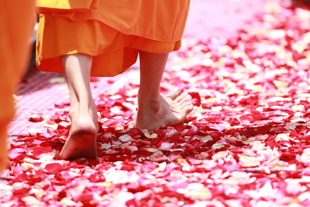 Feet of Buddhist monk walking on rose petals